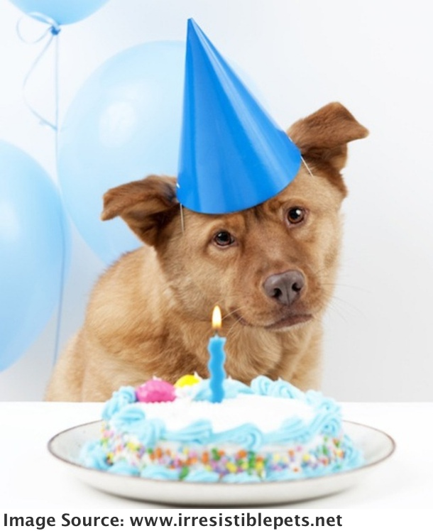 how-to-bake-a-dog-birthday-cake-paw-nation_thumb
